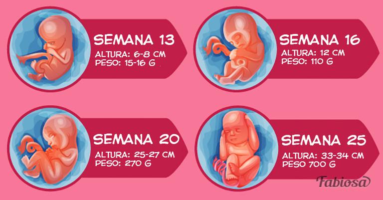 162a3ed30 Segundo trimestre del embarazo por semanas  qué esperar y qué tomar en  cuenta