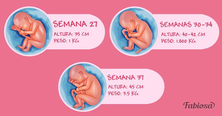 aebaaf5c3 Tercer trimestre del embarazo por semanas  la dulce espera de un bebé